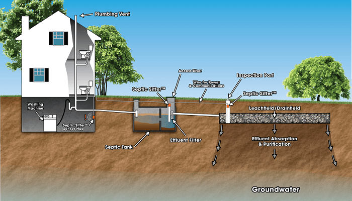 trees with shallow roots to plant above septic tank