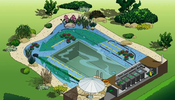 The Benefits Of A Natural Swimming Pool Red Cedar Inc
