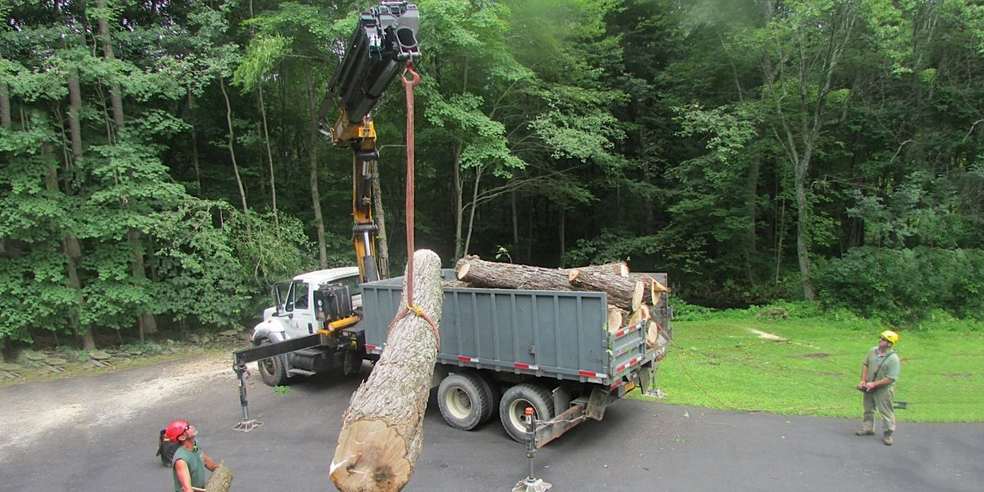 tree services for tree removal